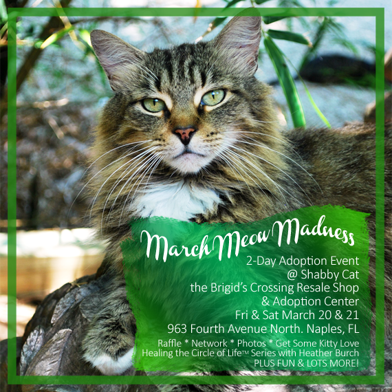 March Meow Madness 2-Day Adoption Event Mar 20-21